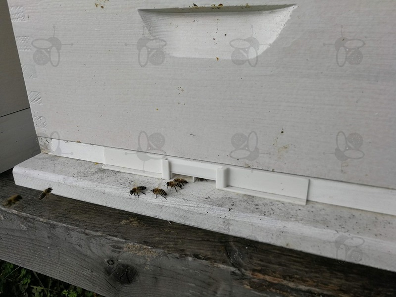 Bees Robbery